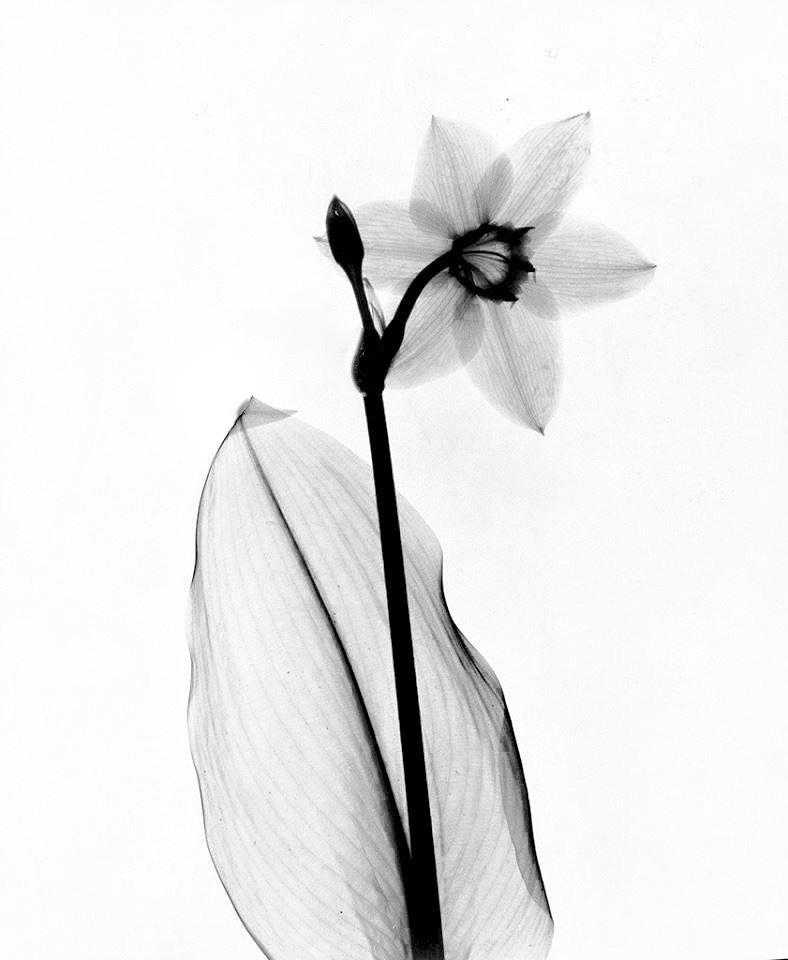 Black Narcissus 15